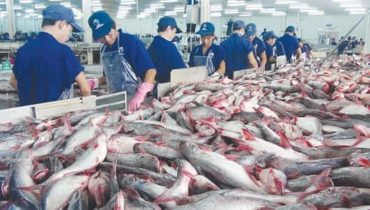 Fish Producing Countries