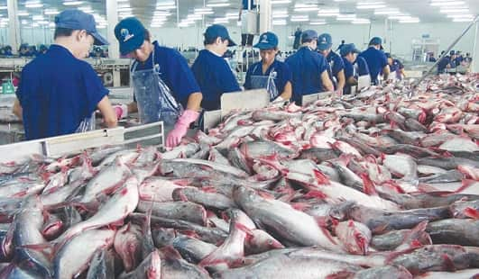 Top 10 Largest Fish Producing Countries In The World - India's Stuffs